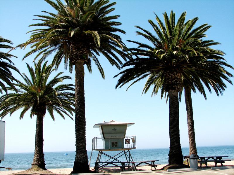 Palm_trees_